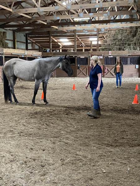 Team Building with a horse!